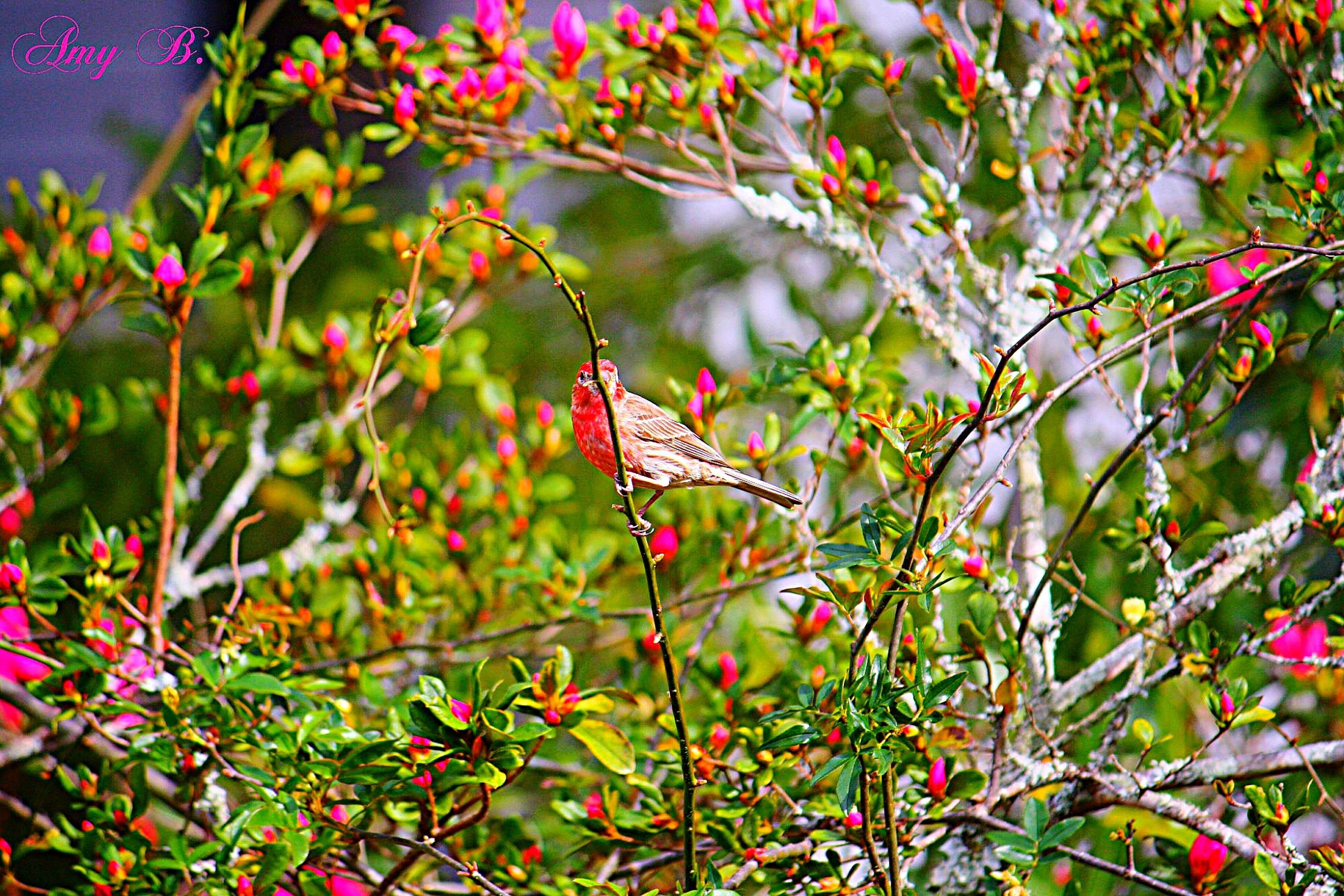 growth, branch, leaf, plant, red, flower, nature, freshness, beauty in nature, tree, focus on foreground, close-up, pink color, twig, day, outdoors, green color, stem, no people, fragility