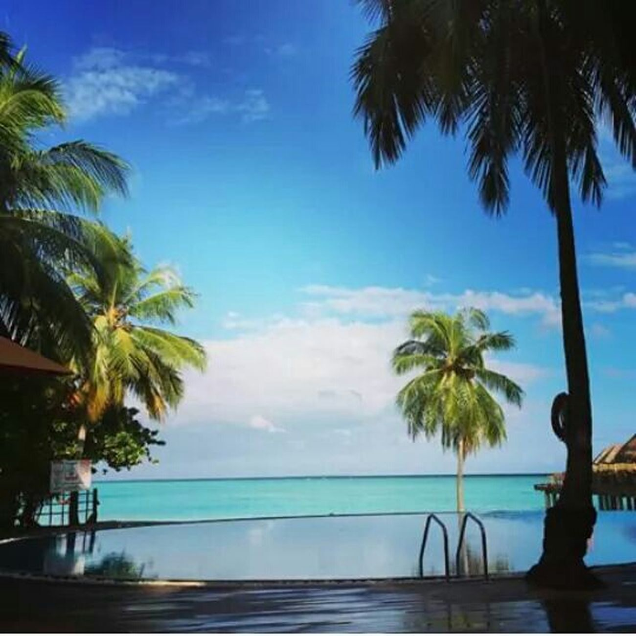 Maldives Miss This  Relaxedmindbodyandspirit Flowers, Nature And Beauty Enjoying The View Oldmemories😊