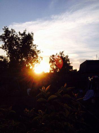 Nature Summer Sun Sunny Evening
