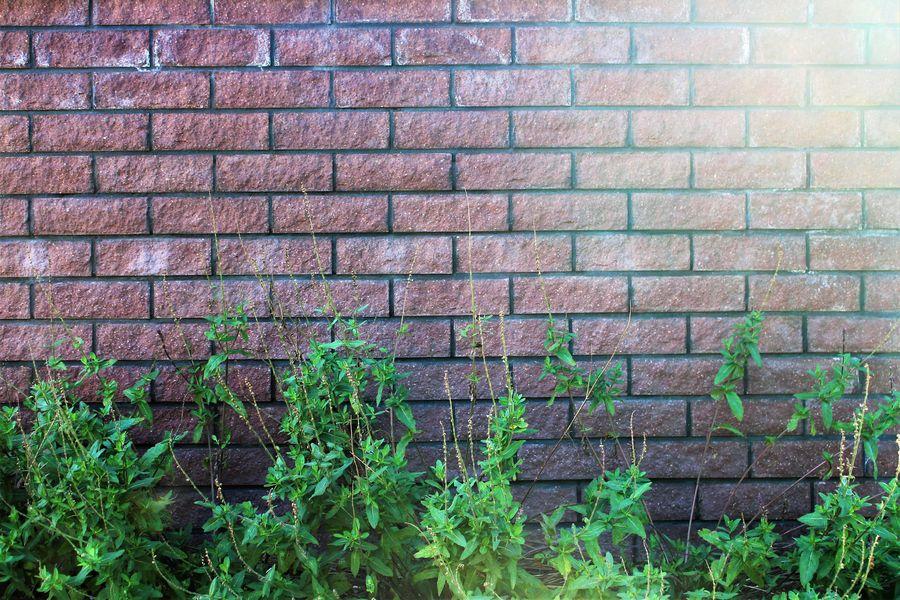 An image of a stone wall in the garden Architecture Building Construction Garden GardenWall Landscape Nature Stonewall Structure Texture Wall