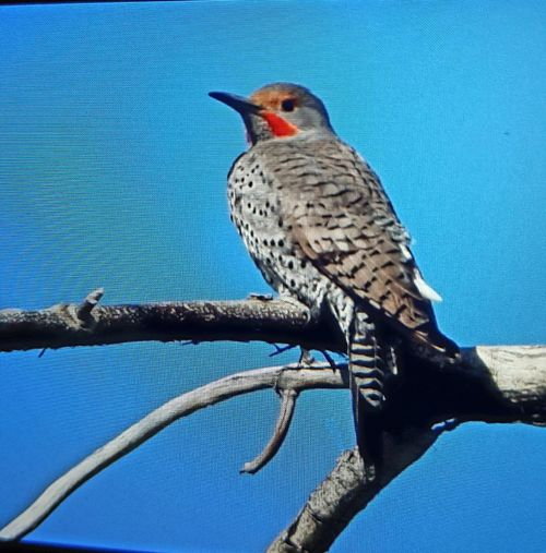 Bird perching Colorado