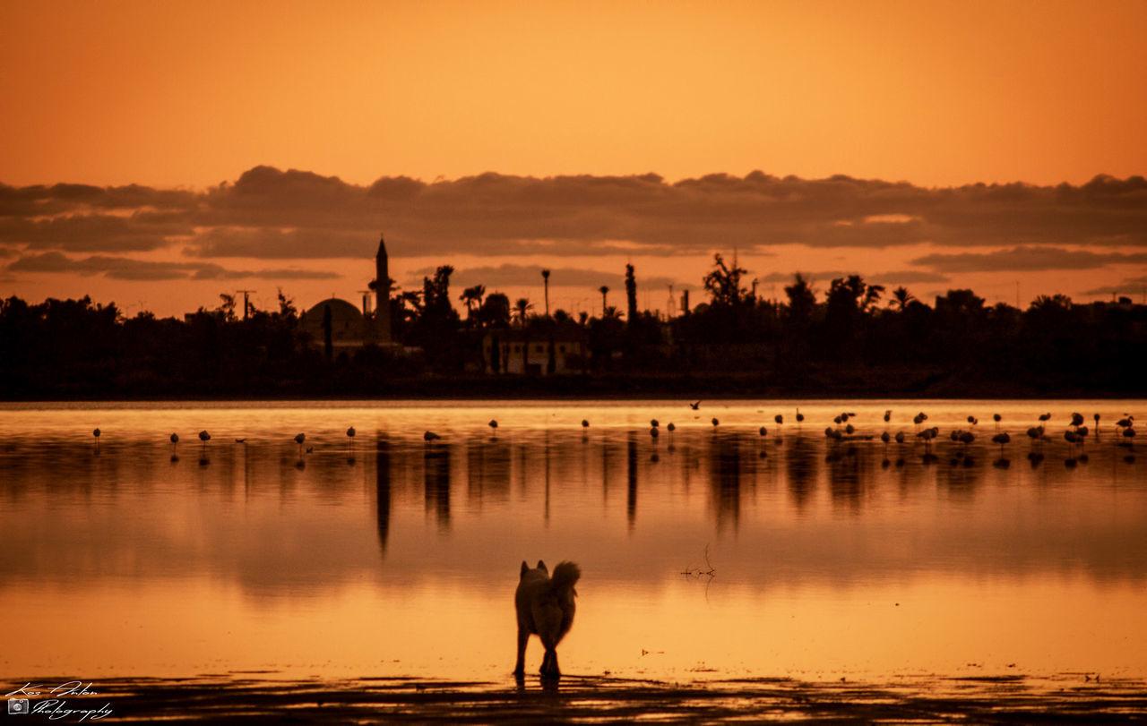 Animals In The Wild Birds Dog Flamingo I Love My Dog Lake Landscape Outdoors Reflection Sunset Water