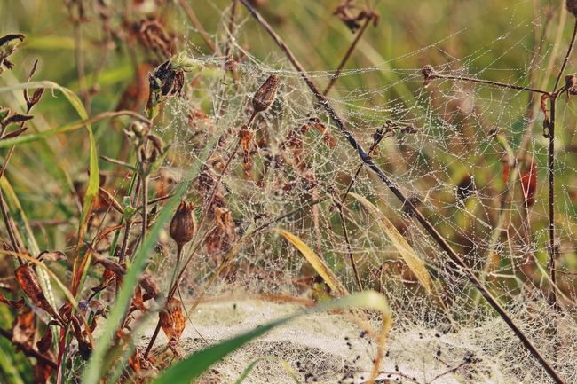 Autumn Beautiful Nature Beauty In Nature Close-up Drop Drops Drops Of Water Faded Field Fieldscape Focus On Foreground Fragility Growth Leaf Natural Beauty Nature Nature Nature On Your Doorstep Nature_collection Naturelovers No People Outdoors Plant Spider Web Spiderweb