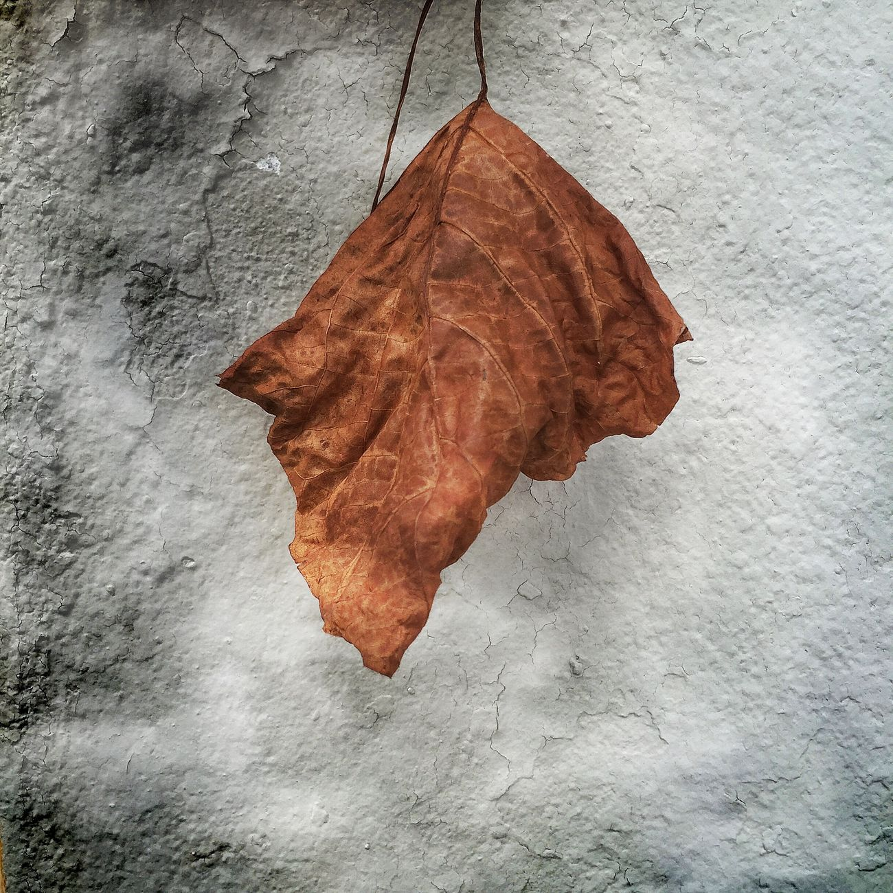 Day 264 Project 365 Bitpoem Leaves Leaf Eye4photography  Creative CreativePhotographer
