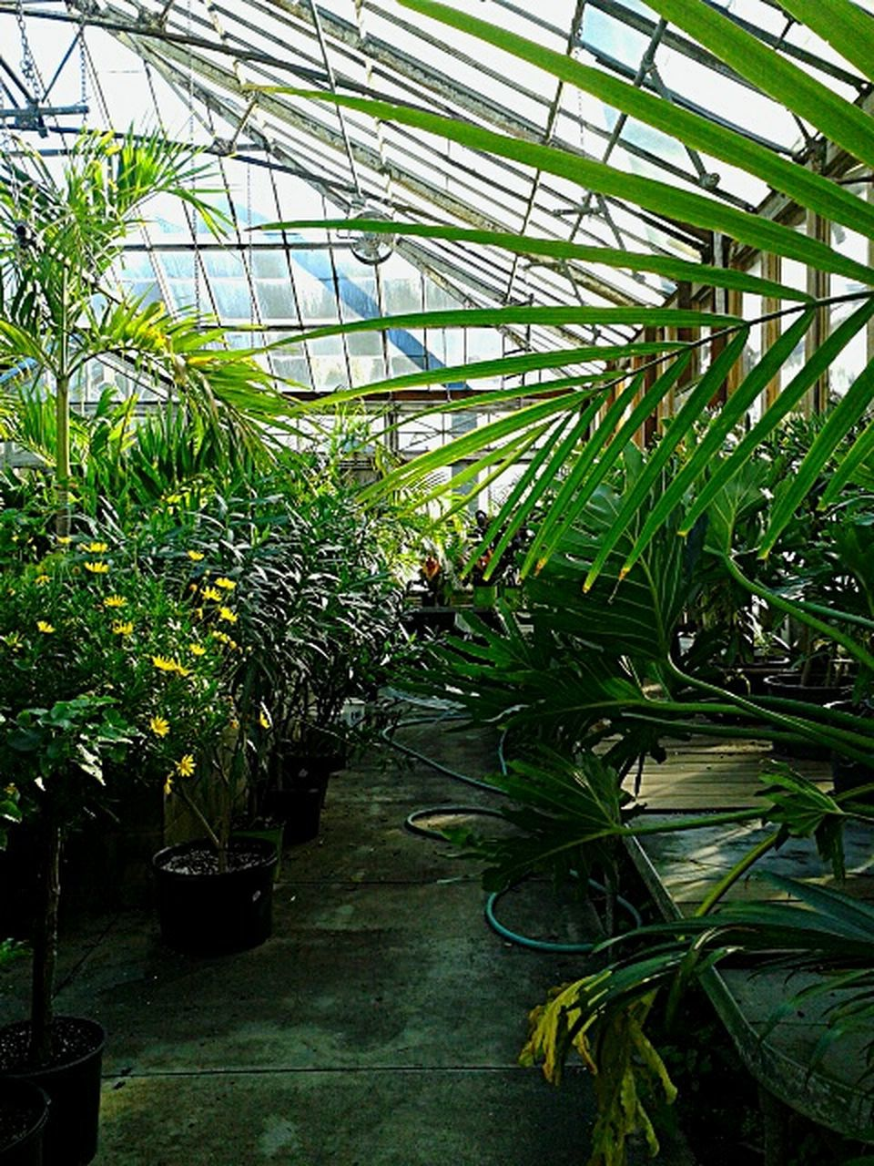 growth, plant, greenhouse, plant nursery, nature, botany, potted plant, green color, leaf, agriculture, indoors, grass, no people, day, architecture, beauty in nature, botanical garden