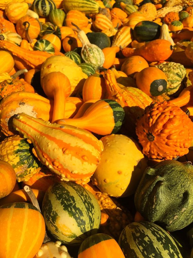 Pumpkins Autumn Herbst Pumpkin Orange Colours Colours Of Nature Yellow Green Farm Farmers Market Produce Farming Growing Vegetables Veg Assortment Heritage Veg Stripes Pattern Stripe Gourd Squash Courgette Nobbly Haloween