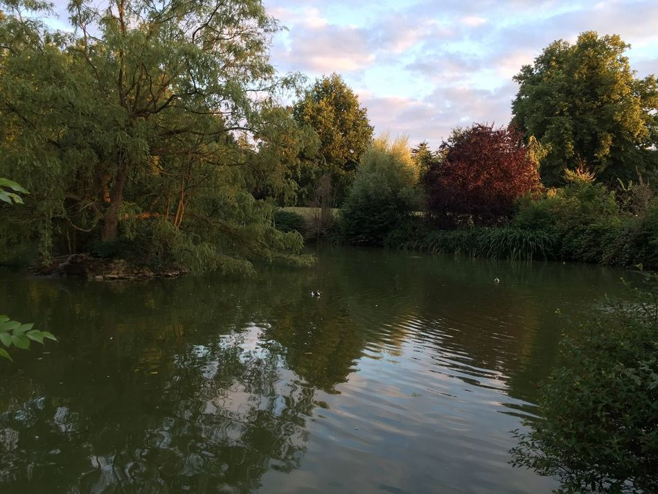 Nature Outdoors Pond Duck Pond Lake Dusk Ducks Ducks In Water Papworth Everard Papworth Hospital