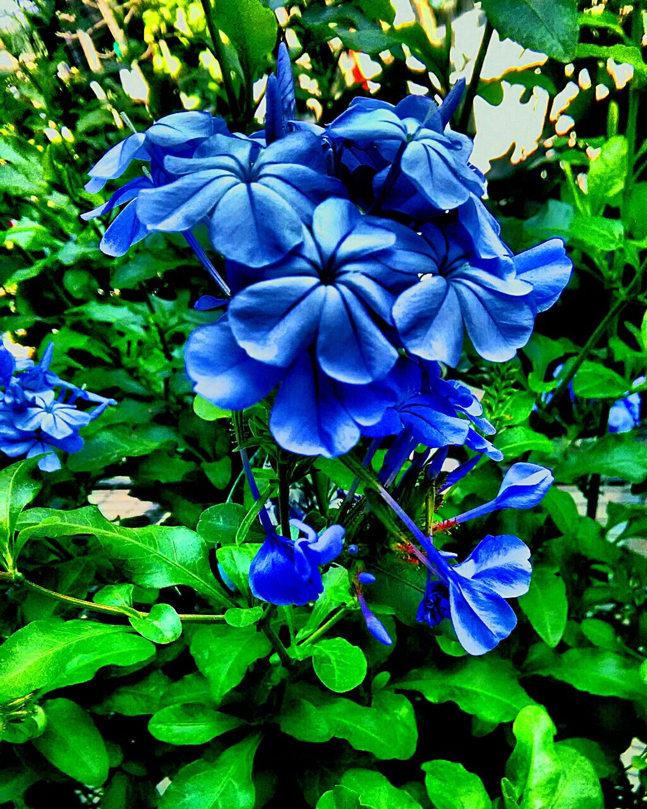 flower collection Purple Flower Nature Blue Growth Freshness Beauty In Nature Petal Fragility Plant Blooming Flower Head Day Outdoors Close-up No People Water