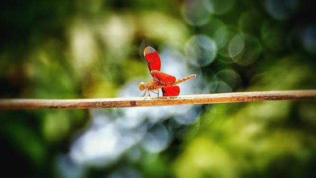 Dragonfly balancing Nature Nature_collection Naturelovers Dragonfly Insects  Insect Wings Outdoors Laos Forest EyeEm Nature Lover Popular Colors Life Natural Bookeh Bookeh