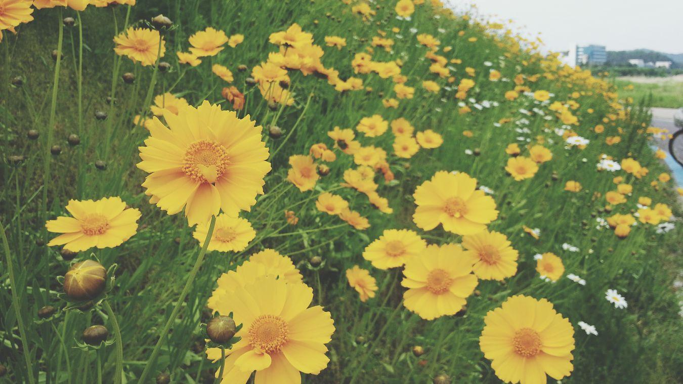 Walking Around Relaxing Flowers Taking Photos Enjoying Life Nature Photo♡