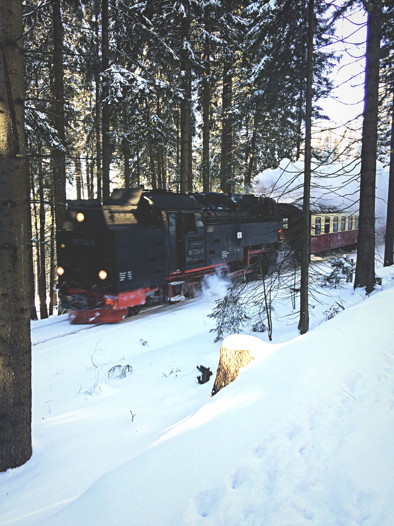 Winter Snow Cold Temperature Weather Tree Nature Covering Outdoors Day Frozen Beauty In Nature Bare Tree Scenics No People Brockenbahn Brocken Steam Train Dampflok Harz