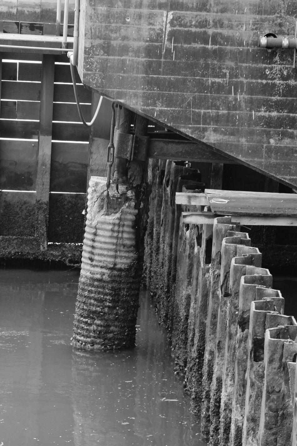 Black & White Taking Photos Edgewater