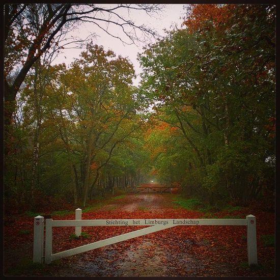 Het Limburgs Landschap Arcen NL Autumn Fall leaves Trees gate Holland Colors