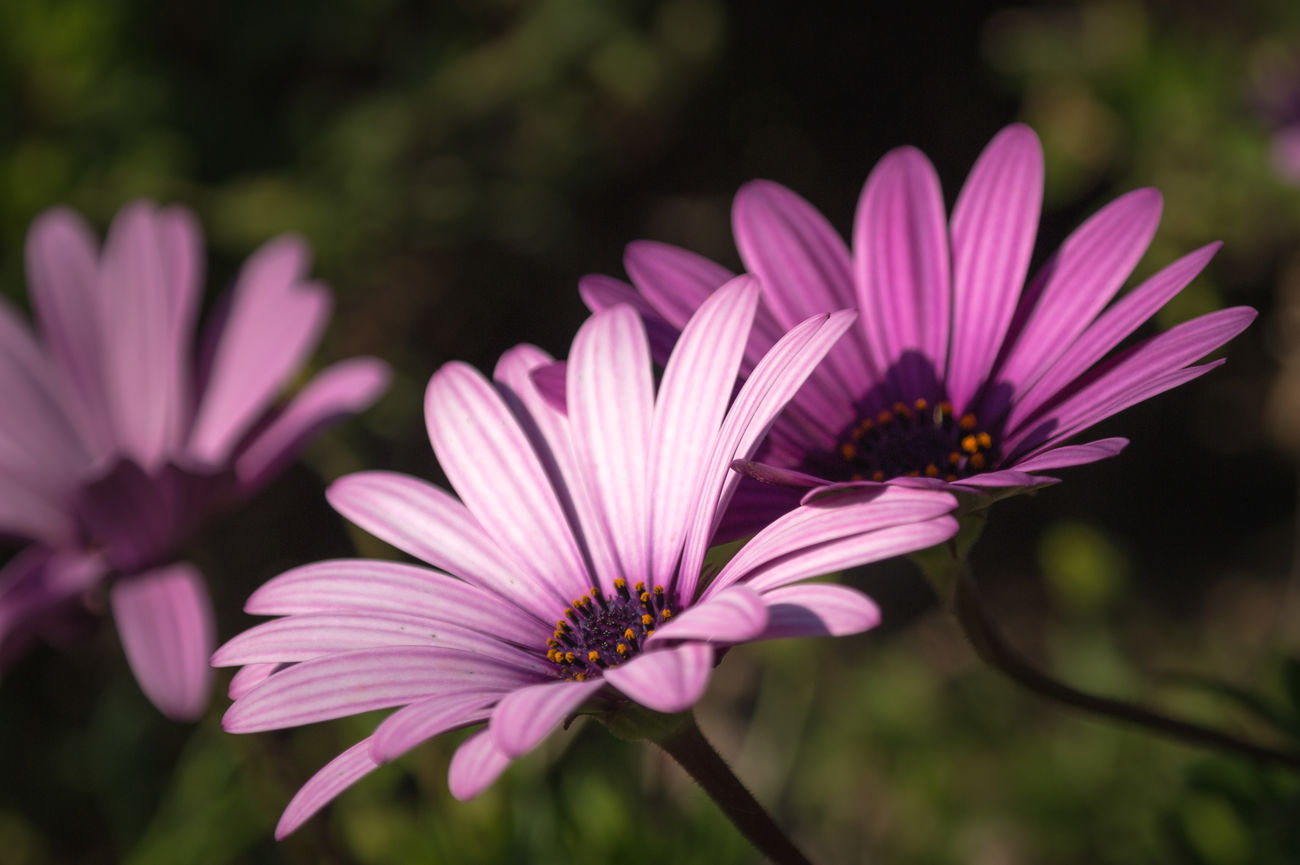 Flower Fragility Beauty In Nature Nature Freshness Focus On Foreground Growth Petal Flower Head Pink Color Plant Close-up Pollen Purple Blooming No People Outdoors Day Eastern Purple Coneflower HDR Streetphotography