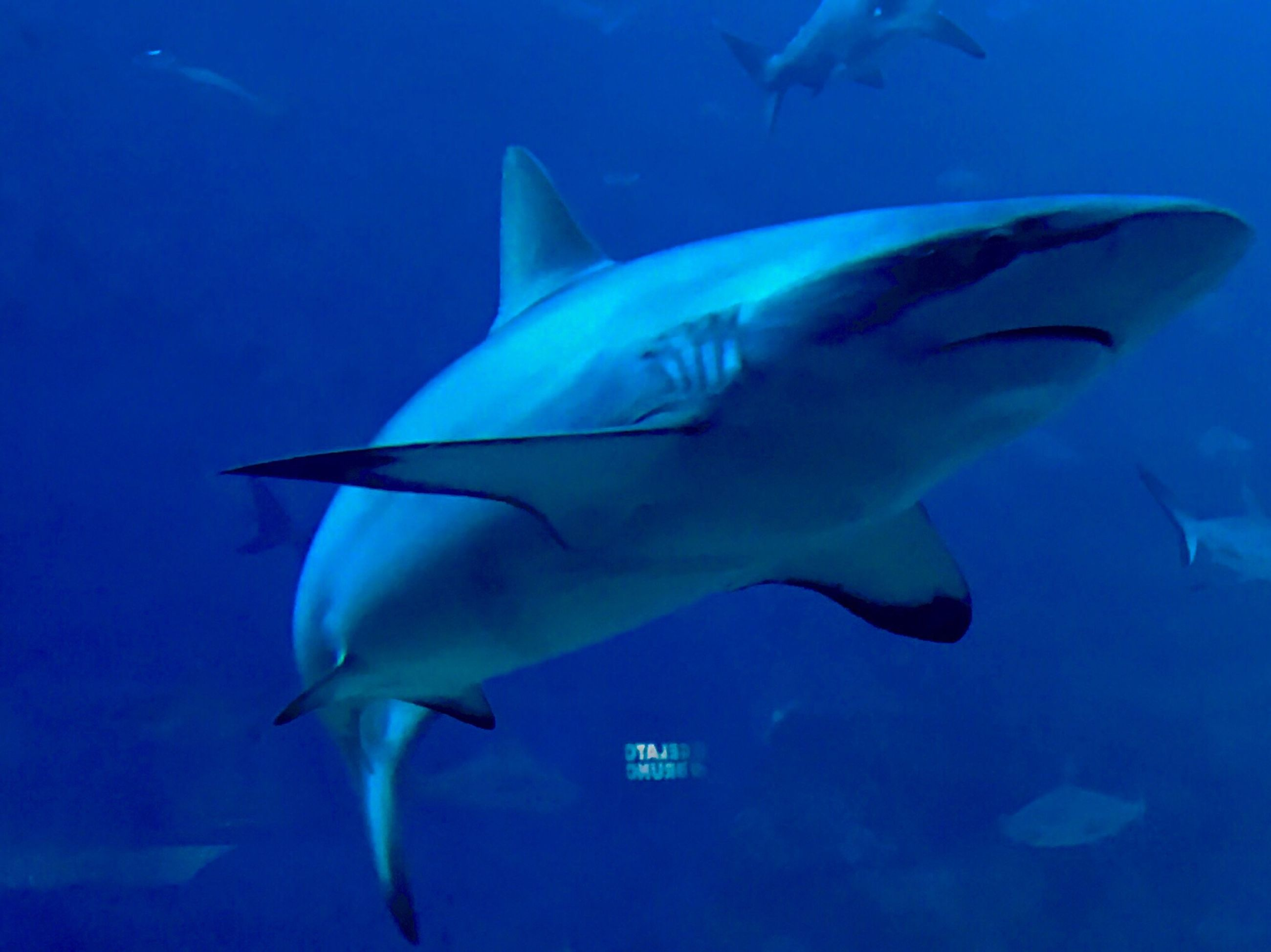animal themes, animals in the wild, wildlife, fish, water, swimming, sea life, blue, sea, underwater, undersea, close-up, togetherness, zoology, nature, beauty in nature, no people, vibrant color