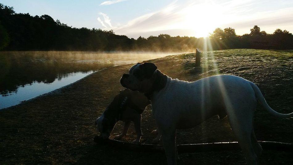 By Leesa Morris Belhus Woods Country Park South Ockendon Photosofrm15 I Love My Dog American Bulldogs Sundays