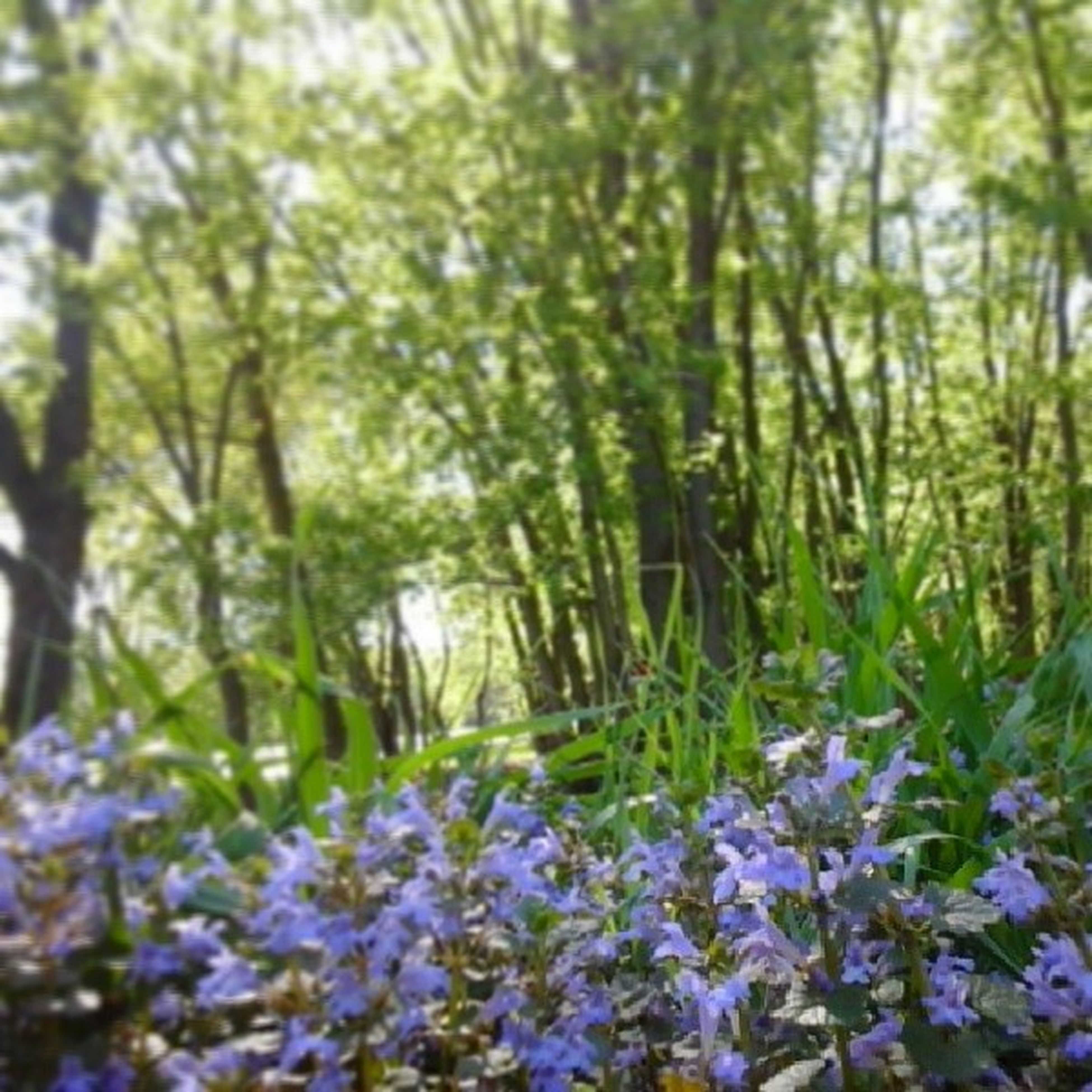 flower, growth, beauty in nature, nature, freshness, plant, tranquility, fragility, tree, field, purple, tranquil scene, blooming, sunlight, scenics, forest, outdoors, day, selective focus, no people