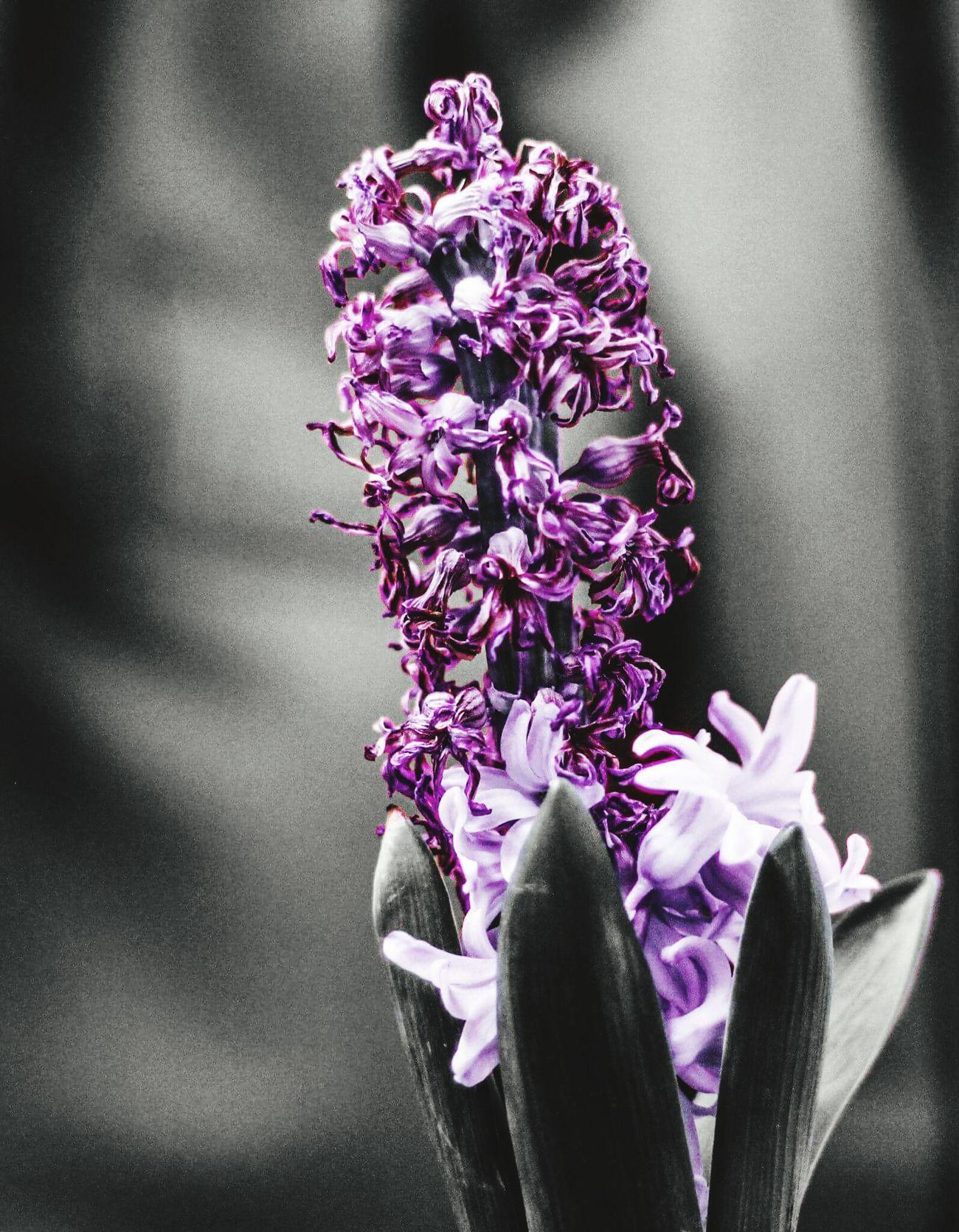 Depth Of Field Flower Purple ♥ Love So Much 💜