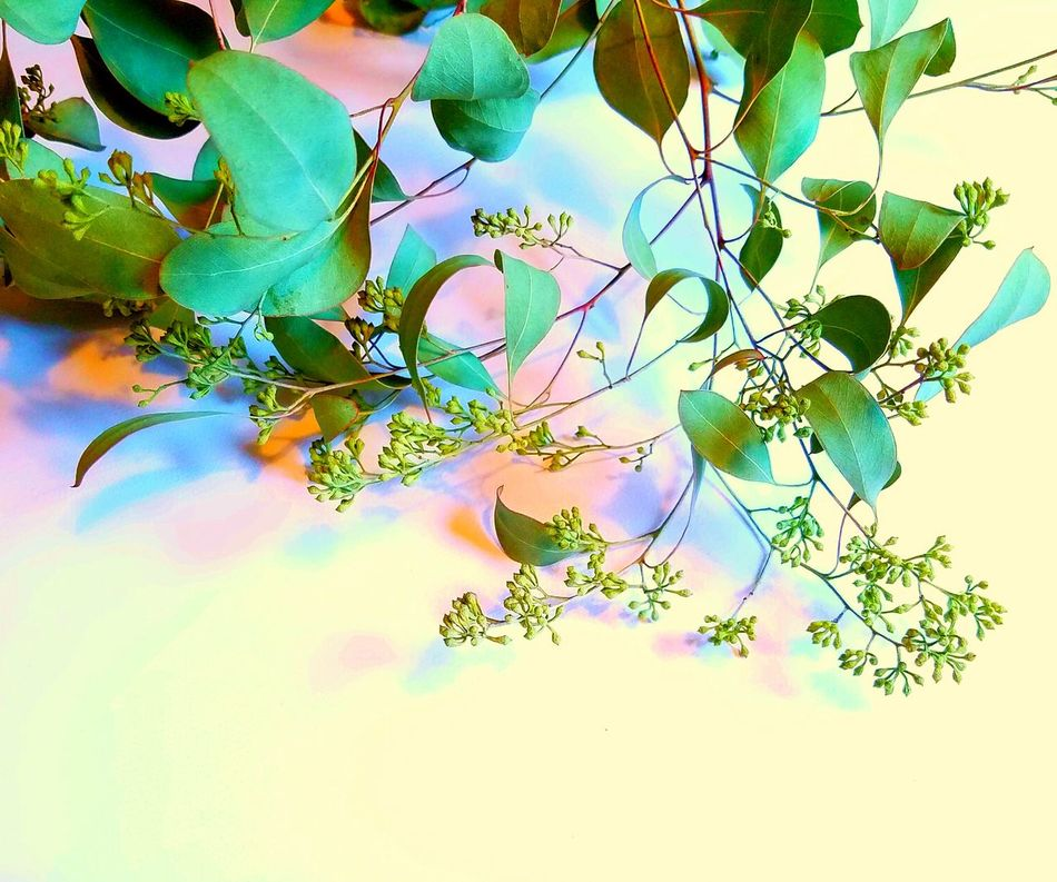 Dry Greenery Beauty In Nature Branch Close-up Day Dry Fragility Freshness Greenery Growth Leaf Nature No People Outdoors Pastel Colors Sky The Song Of Color Tree Millennial Pink