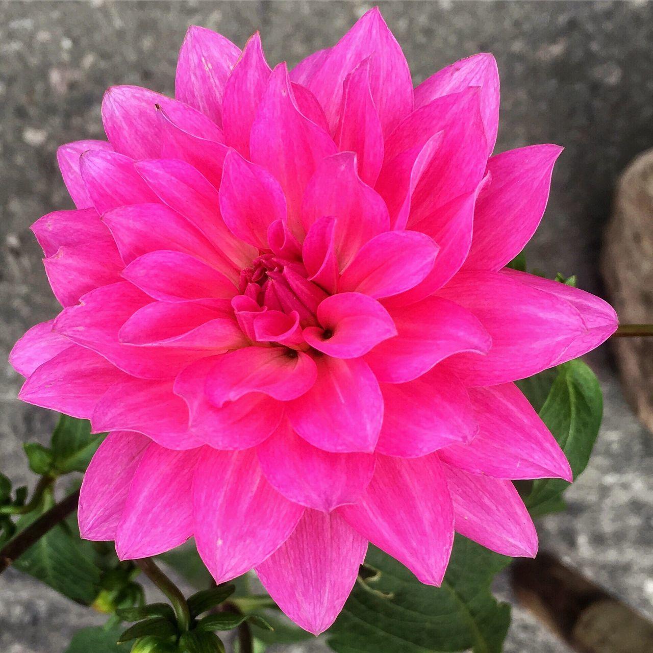 Millennial Pink Nature Flower