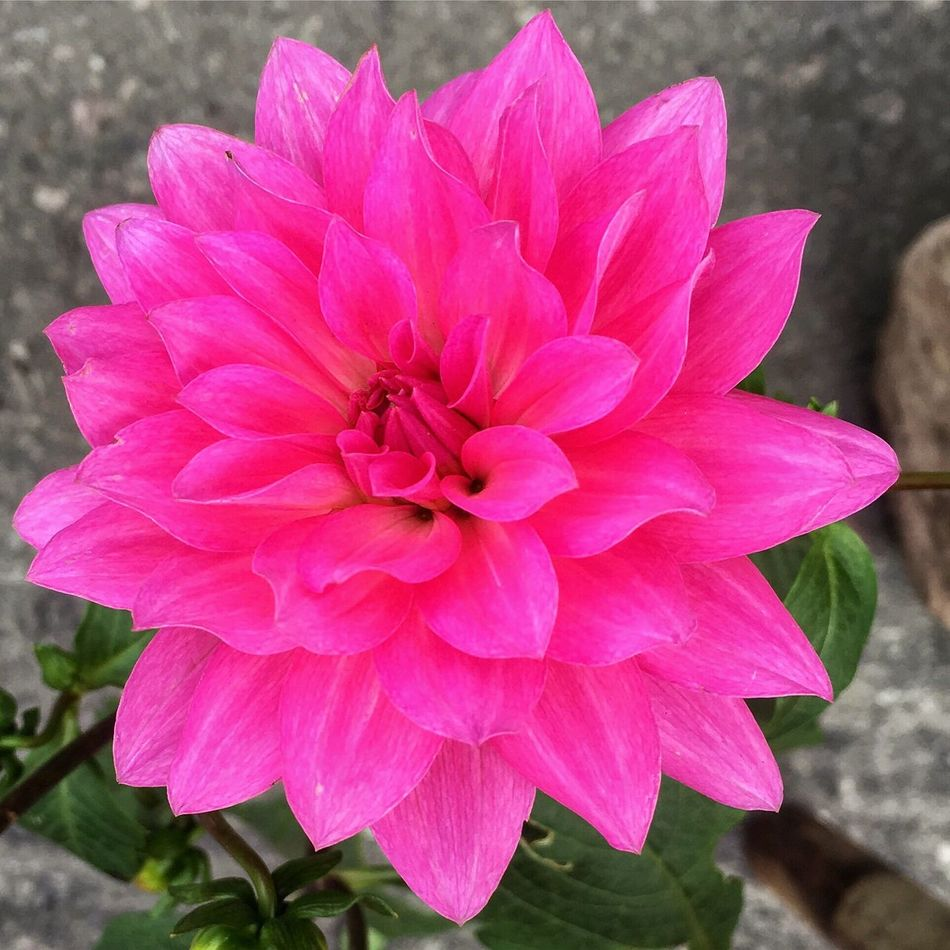 Millennial Pink Nature Flower