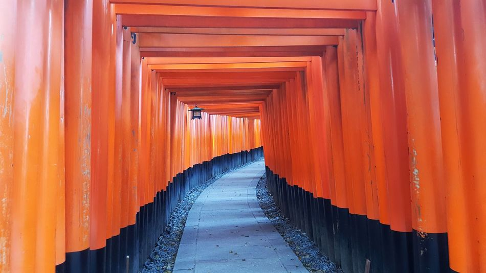 Orange Color Tourism Travel Destinations Architecture Tradition Travel Cultures Built Structure Architectural Column The Way Forward Day No People Outdoors Fushimi Ko Kyoto Fushimi Inari Kyoto Fushimi Inari Taisha Shrines & Temples Fushimi Inari Shrine Shrine Of Japan Temple Sacred Places Shrine Kyoto City Kyoto,japan Kyoto Japan