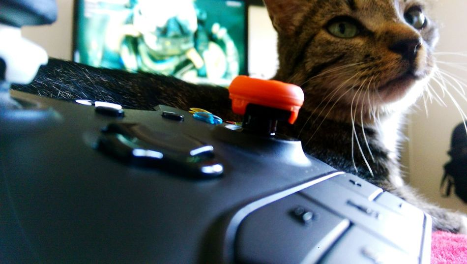 Cats Xbox Gaming Animals Animal Photography Green Eyes Photography Taking Photos Check This Out EyeEm Best Edits