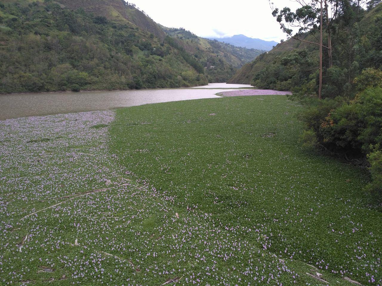 Flower Green Color Landscape Macro Photography Nature Plants Prairie Scenes River Stones
