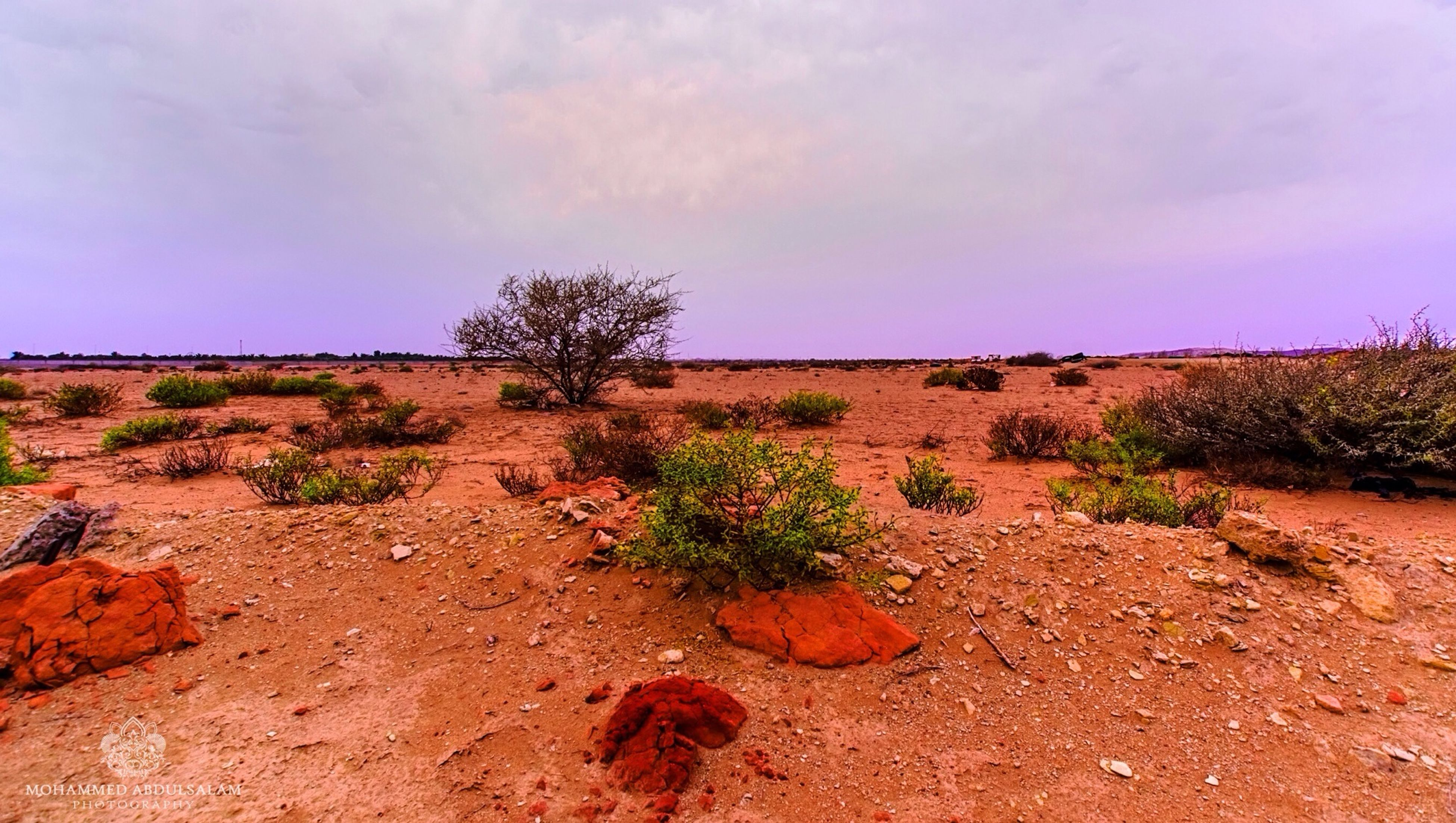 sky, tranquility, tranquil scene, landscape, nature, plant, growth, beauty in nature, scenics, sand, field, tree, cloud - sky, cloud, desert, non-urban scene, remote, no people, day, outdoors