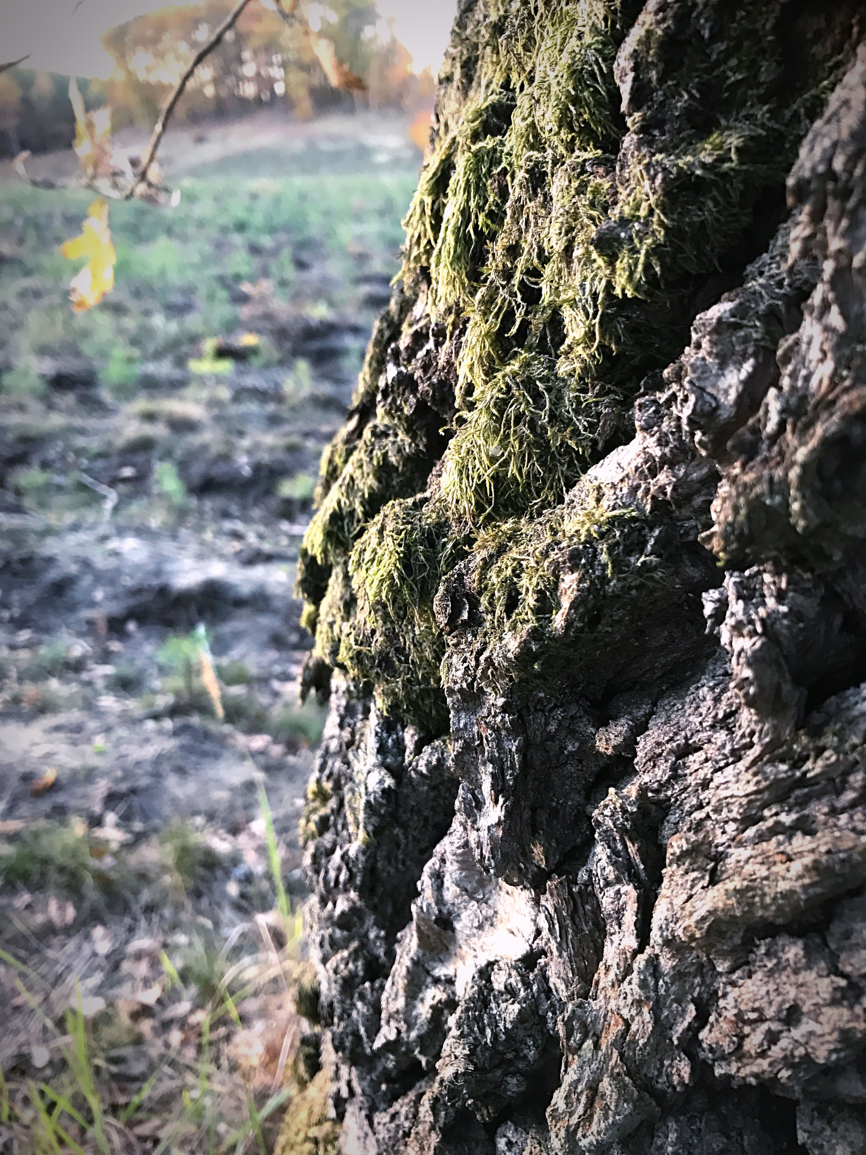 nature, close-up, beauty in nature, textured, no people, outdoors, day, tree, huge