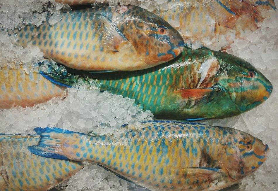 FishEyeEm Shine Shiny Fish Fishes Fish Market Fishing Village FishMarket Fishermen's Life EyeEm Gallery EyeEm Best Shots EyeEm Best Edits Fishing Time Seafoods EyeEm Fisherman Colors Seafoodporn Market Seafood Market Upside Down Photography Onice