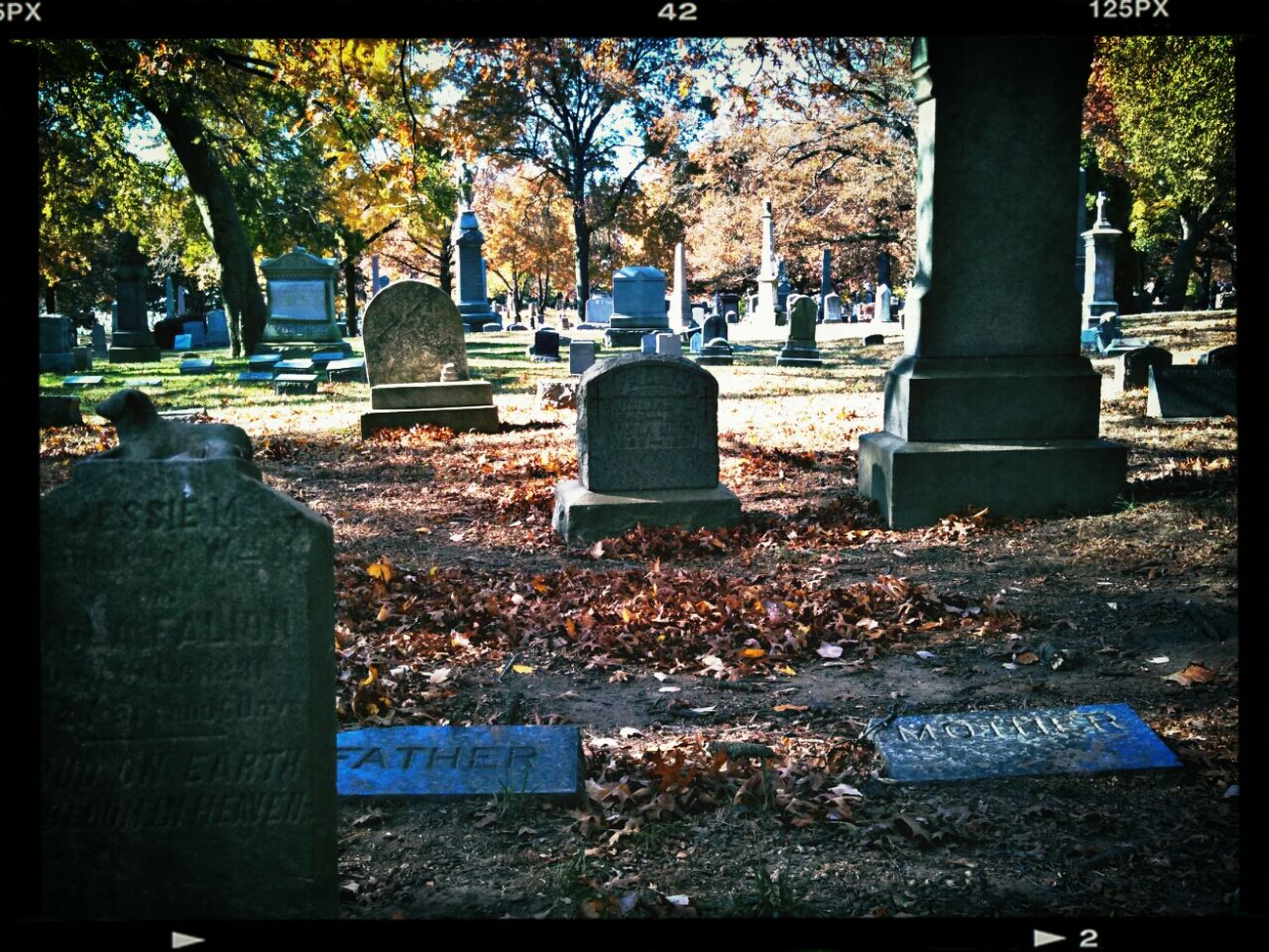 Foliage Cemetery Brooklyn Clara Filter