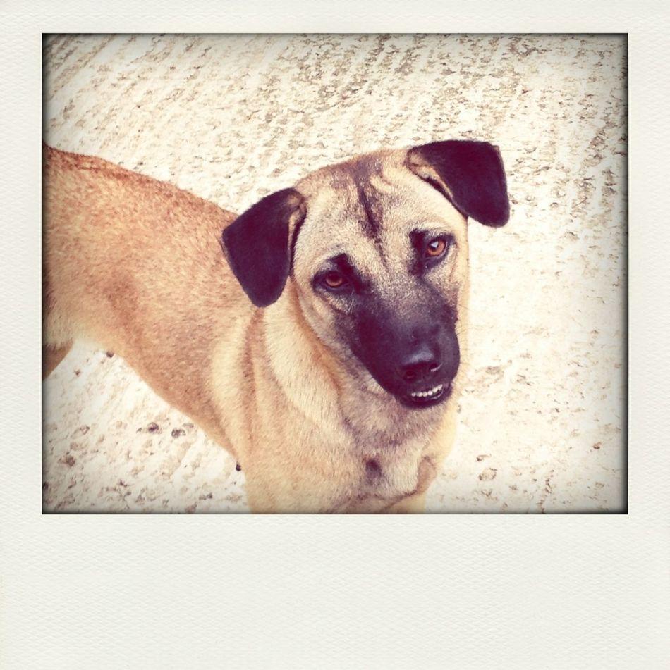 Stray dog cuteness alert.