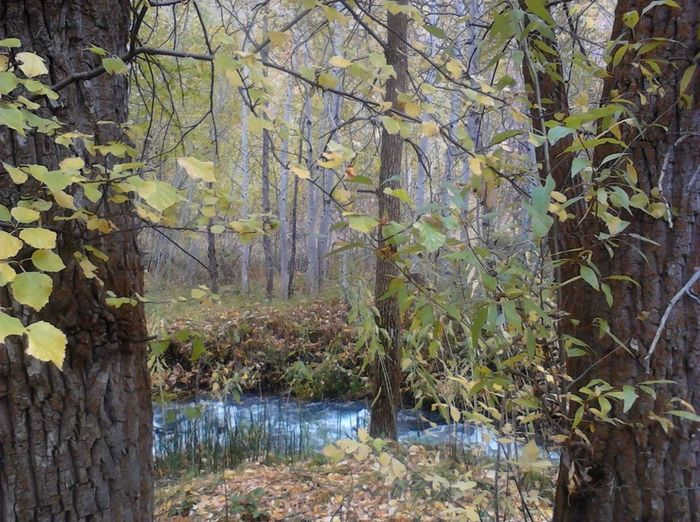 Beauty In Nature Druid's Den Enchanted Forest Nature Tranquility Tree Tree Passage Water