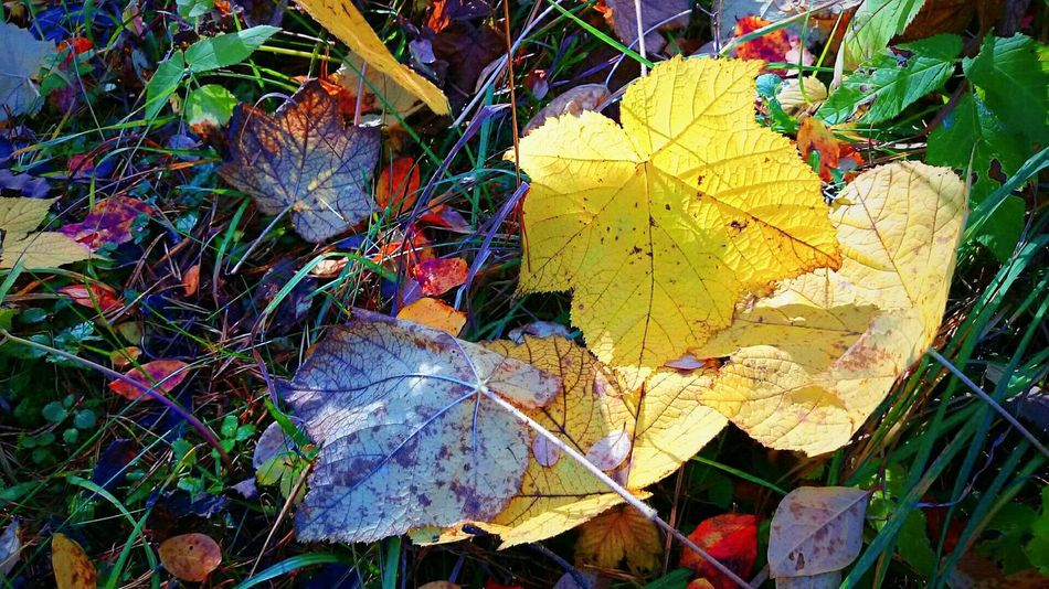 A walk through the Leaves - NõmmeAutumn Leaves Autumn Leaves Nature Lightroom