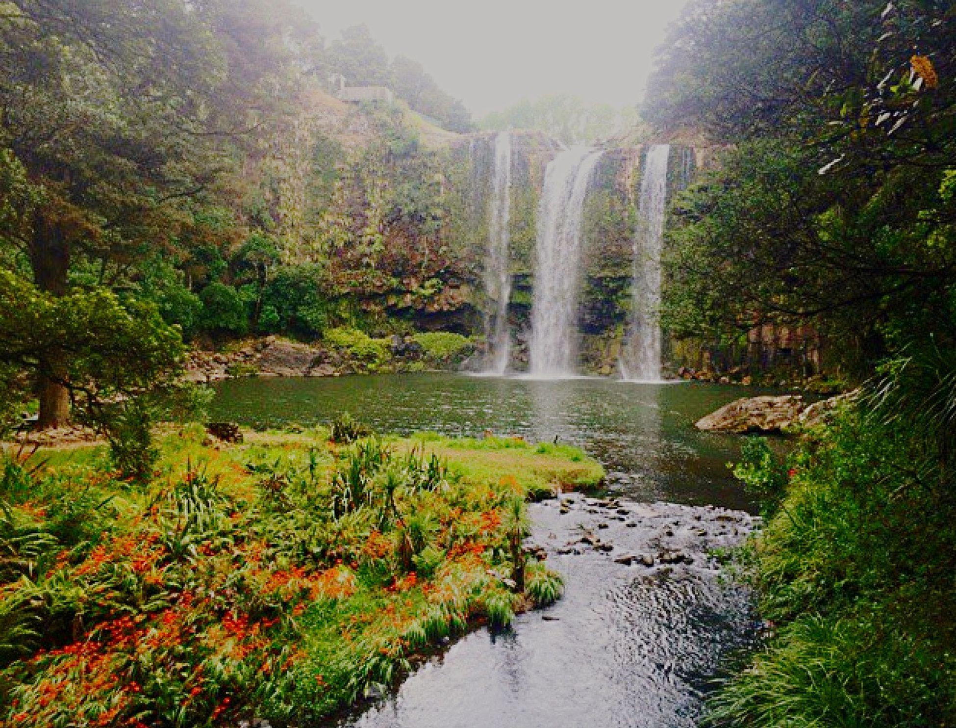 whangarei falls 😍