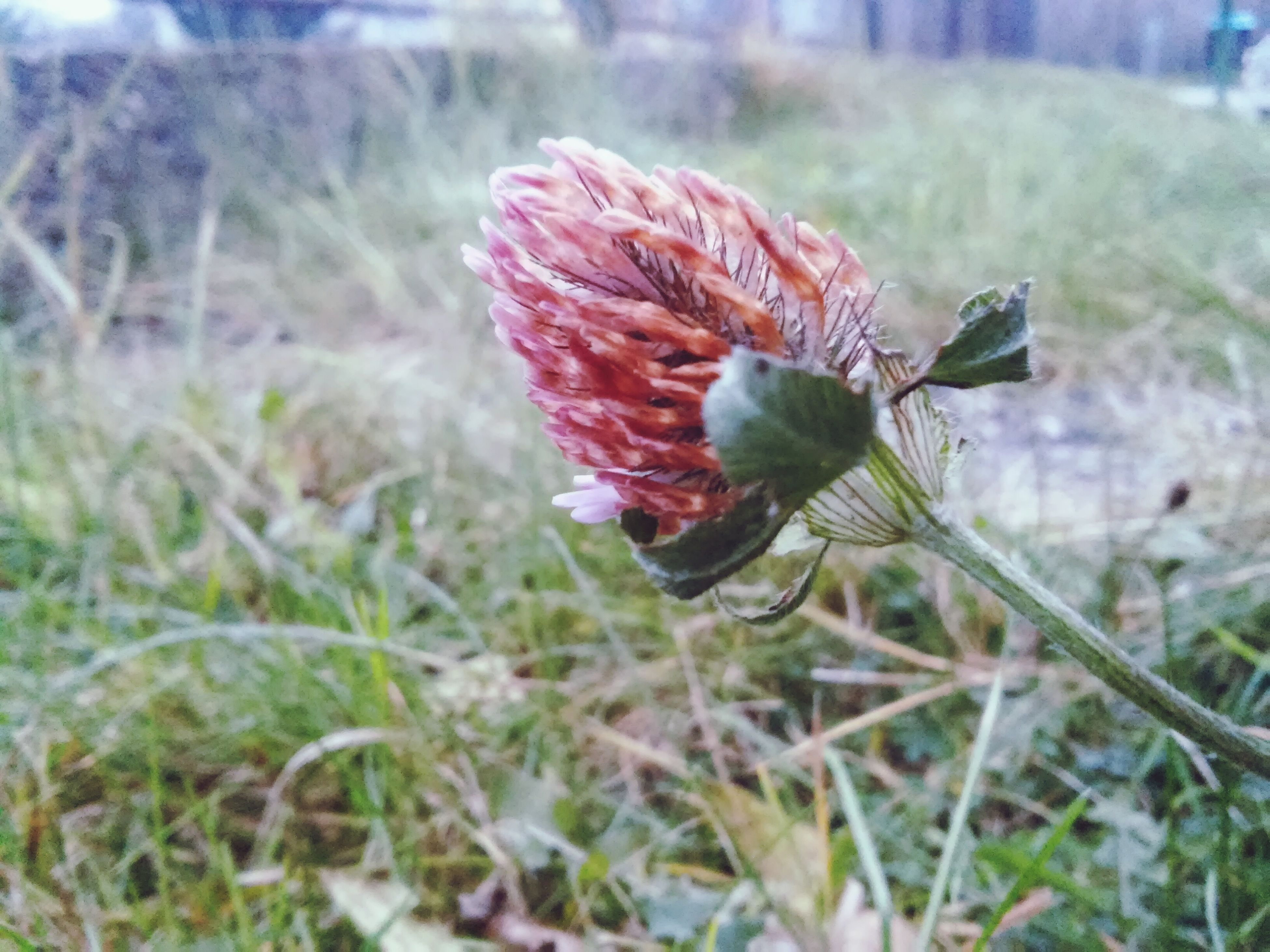 focus on foreground, animals in the wild, close-up, insect, animal themes, one animal, wildlife, flower, red, plant, fragility, nature, growth, selective focus, beauty in nature, freshness, day, stem, outdoors, field