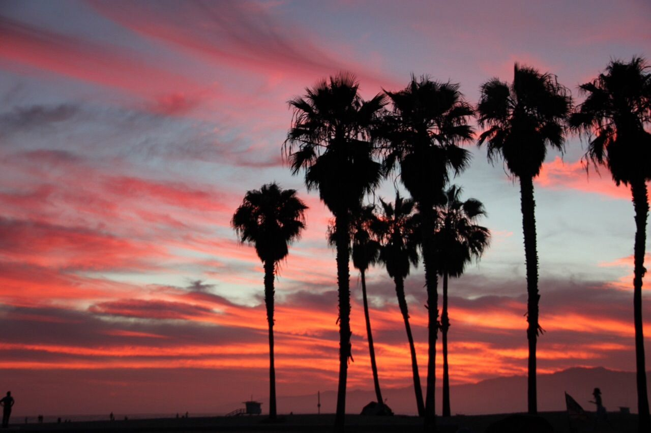 as the sun goes down Venice Beach California Burnig Sky Red Palm Trees