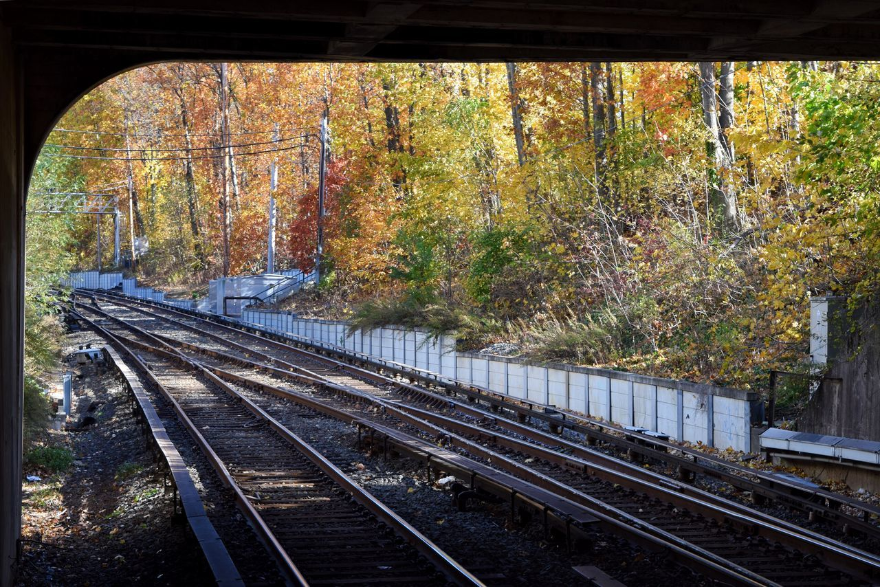 Railroad Tracks In Forest During Autumn