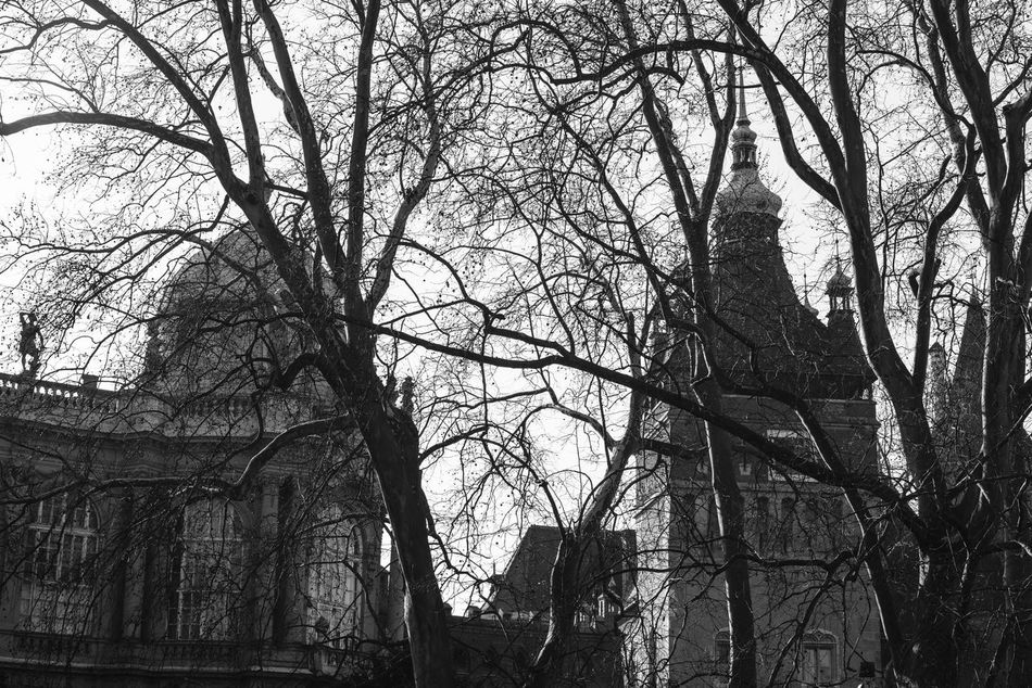 Shapes Architecture Balck And White Building Exterior Built Structure Day No People Outdoors Shapes Tree
