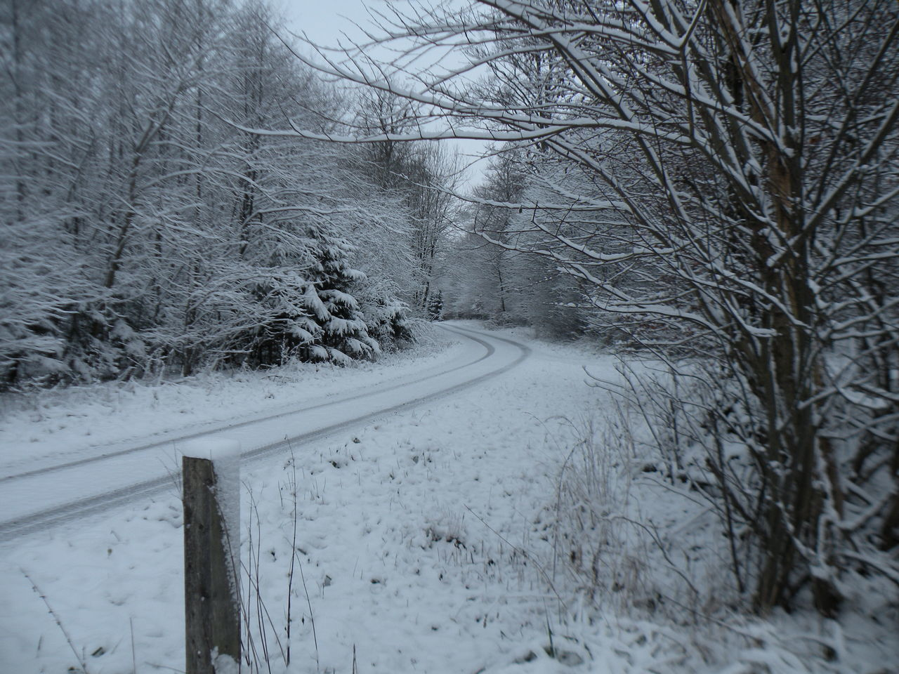 snow, winter, cold temperature, bare tree, weather, nature, no people, road, tranquility, day, tranquil scene, tree, outdoors, the way forward, beauty in nature, branch, scenics
