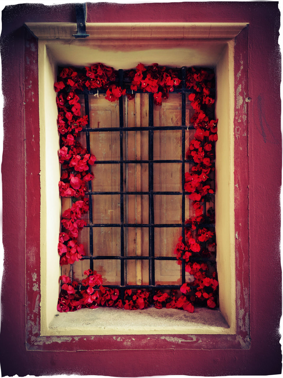 window, red, flower, no people, architecture, built structure, day, indoors, close-up