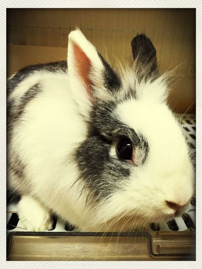 My Rabbit Cute Pets