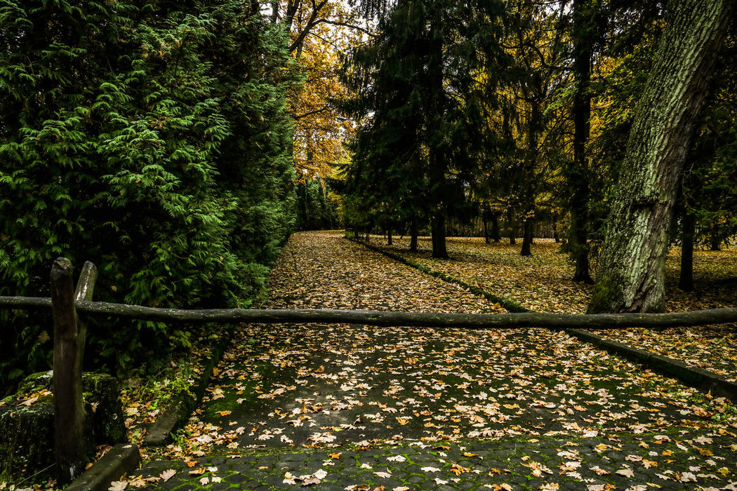 Alley Alleyway Autumn Beauty In Nature Calmness Day Distance Distance View Fallen Fallen Leaves Growth Leaf Nature No People No Thoroughfare No Thoroughfare! Outdoors Tranquility Tree Walk