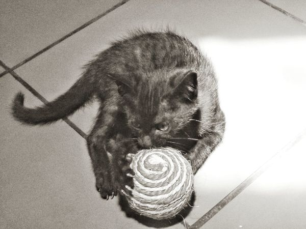 Cat Cat Lovers Catoftheday Black Cat Black Cat Collection Blackandwhitephotography Blackisbeautiful Cats Of EyeEm Playful Kitten Ball Close-up No People Indoors  Animal Themes EyeEmNewHere PhonePhotography Love Photography Emography Eyeemphoto Love To Take Photos ❤ Move On Eyeem