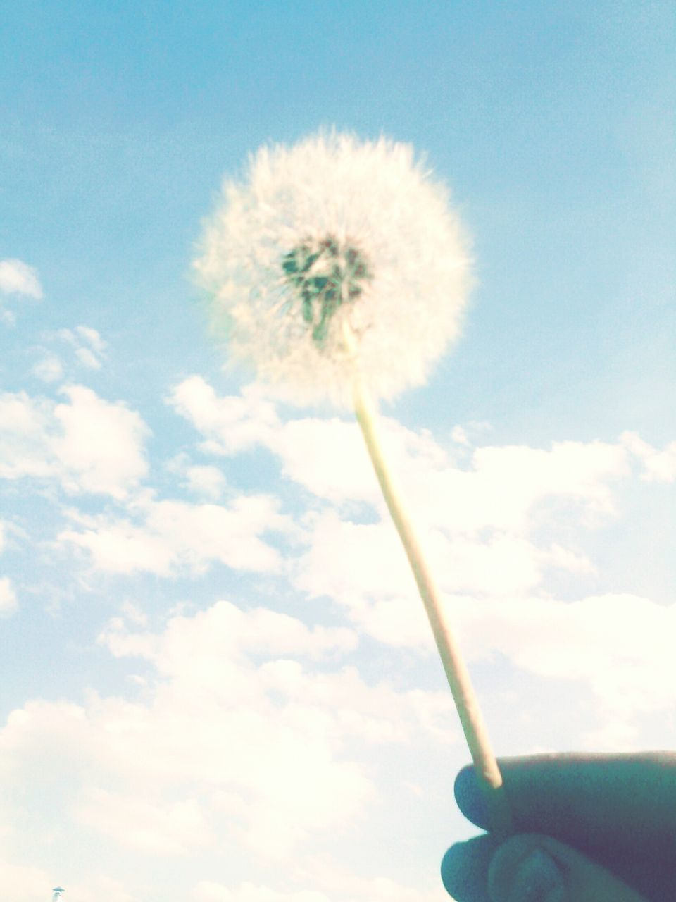 human hand, dandelion, human body part, flower, sky, holding, nature, one person, outdoors, close-up, fragility, cloud - sky, day, beauty in nature, real people, freshness, flower head, people