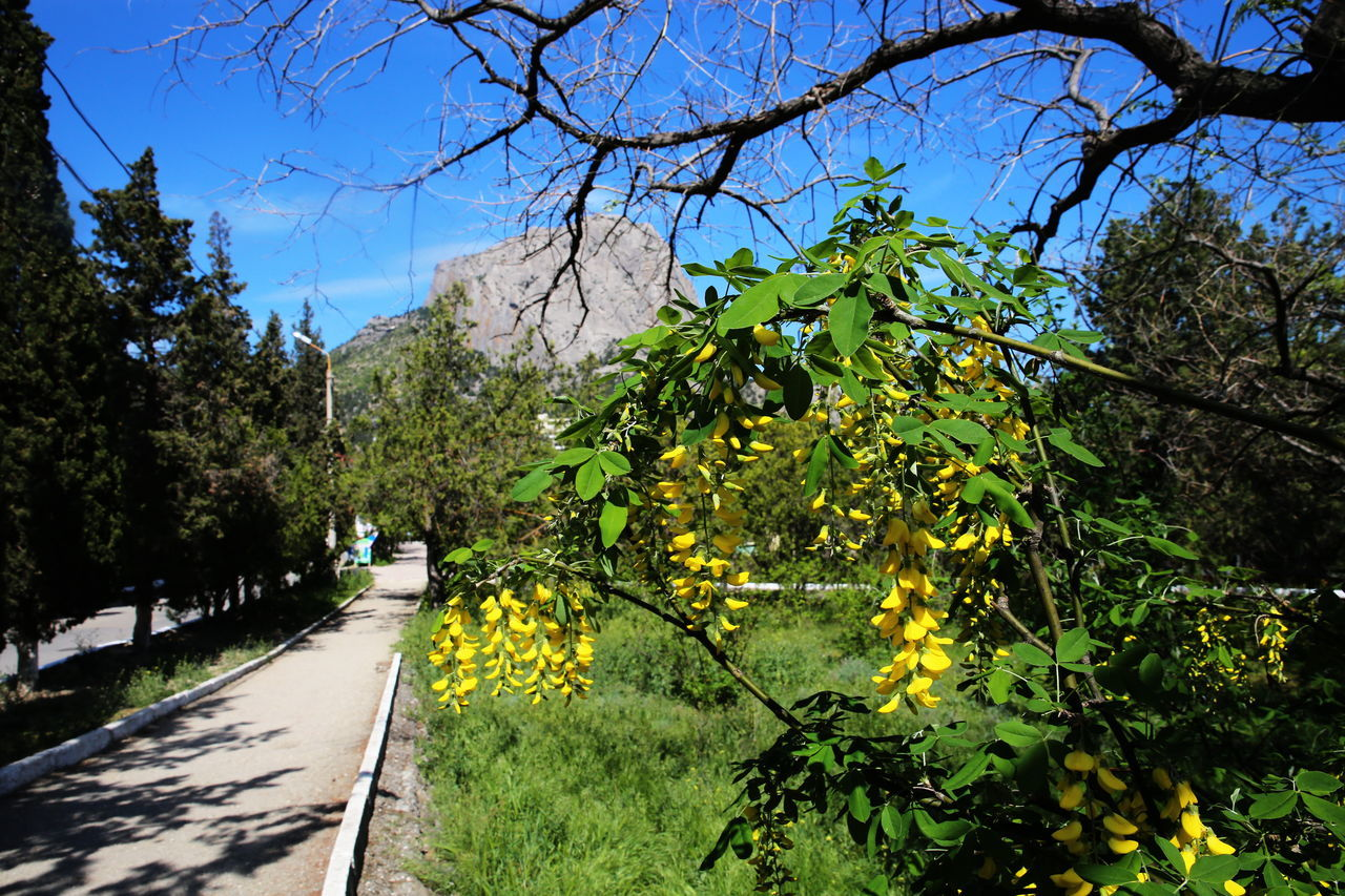 Crimea Flower Growth Nature Plant Spring Traveling Mountains SOKOL Hiking