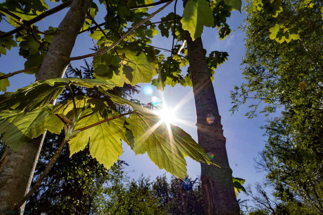 Leaking Light Back Lit Beauty In Nature Branch Bright Day Green Color Growth Idyllic Leaf Lens Flare Low Angle View Nature No People Outdoors Scenics Shiny Sky Sun Sunbeam Sunlight Sunny Tranquil Scene Tranquility Tree Tree Trunk