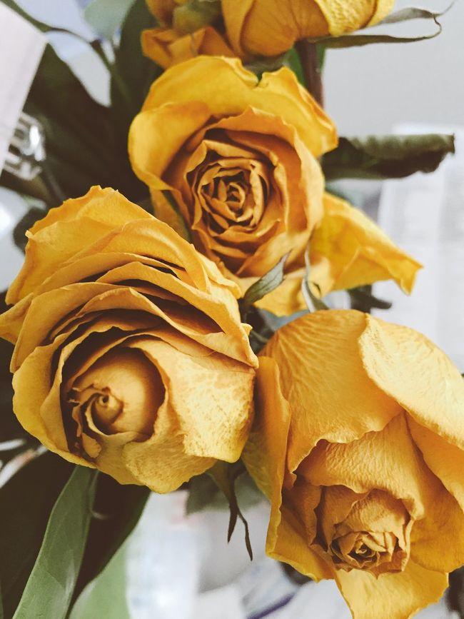 Yellows AMPt_community Summer2016 NEM Mood Best EyeEm Shot Best Of EyeEm Flowers Roses