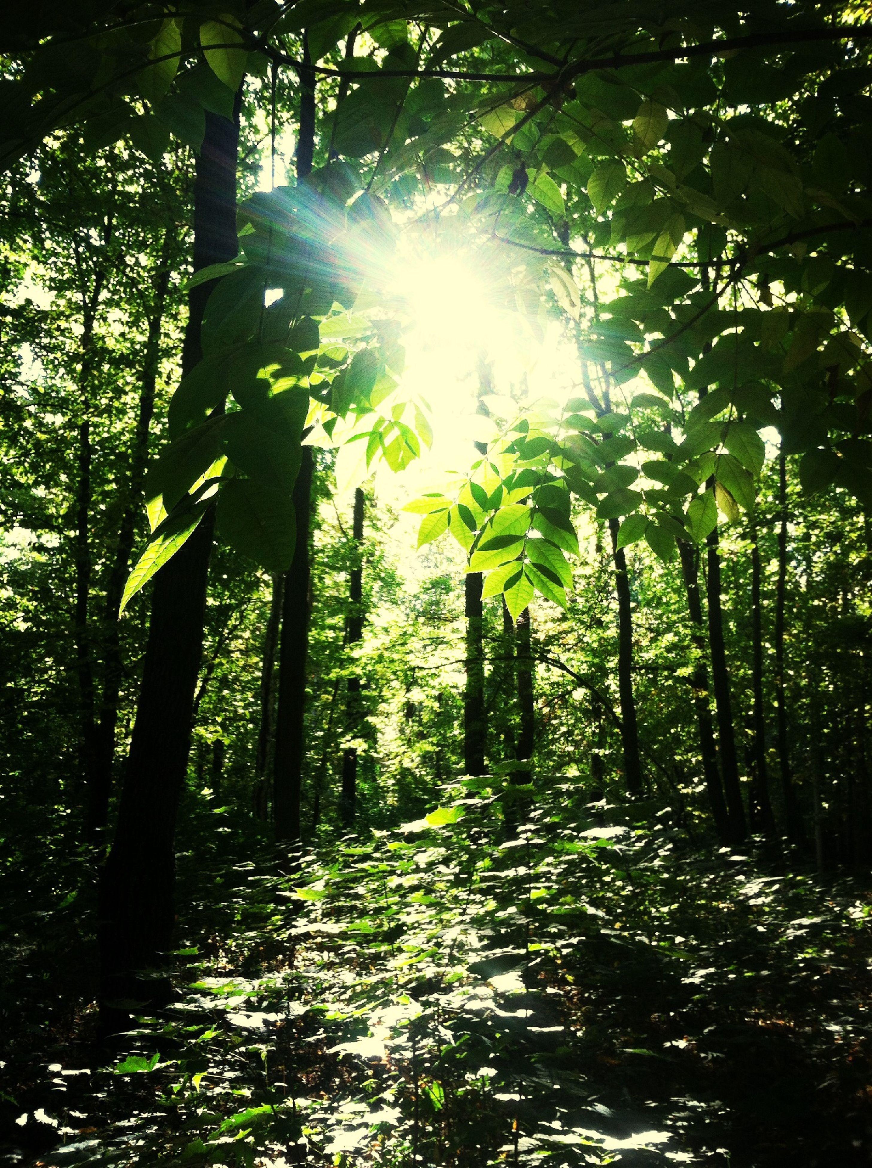 Trees Sun Light